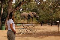 Parque Nacional de Kruger, Sudáfrica, entrevista nuestra vuelta al mundo, blog nuestra vuelta al mundo, nuestra vuelta al mundo, vuelta al mundo, round the world, información viajes, consejos, fotos, guía, diario, excursiones